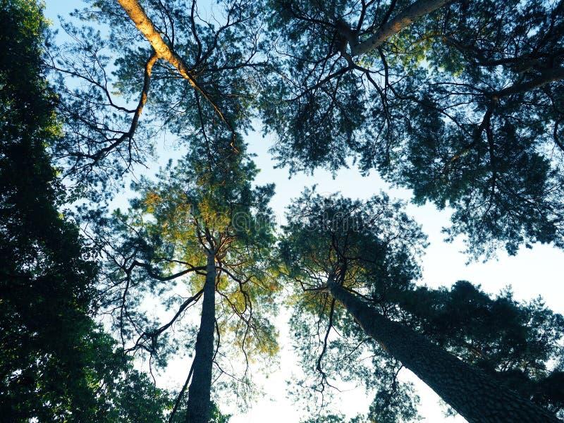 Szeroki kąt strzelający drzewa obraz stock
