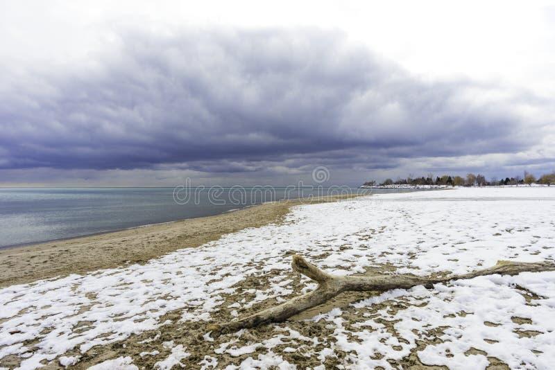 Szeroki kąta widok driftwood na śniegu zakrywał plażę, zbliża się fotografia royalty free