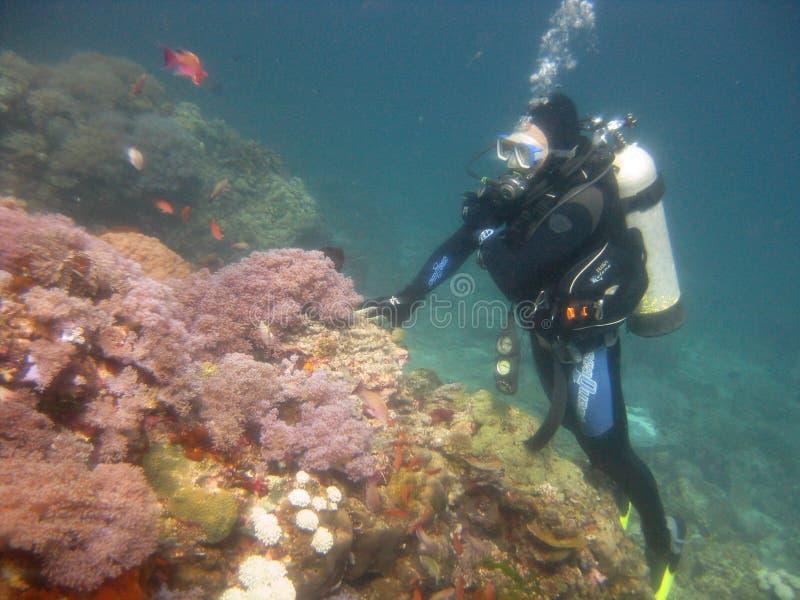 Szeroki strzał nurka w kombinezonie nurkowania, płetwy i sprzęt pływający pod wodą fotografia royalty free