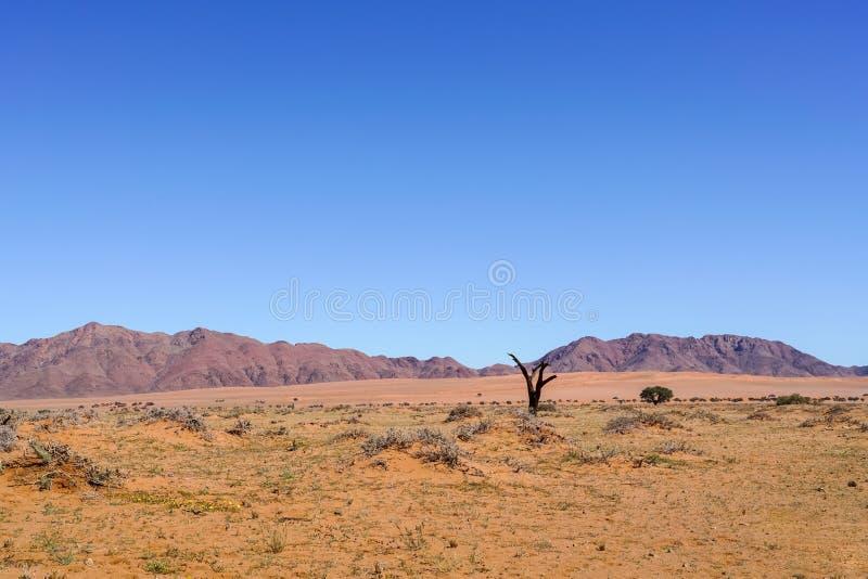 Szeroki typowo południowy Namibia krajobraz zdjęcia stock