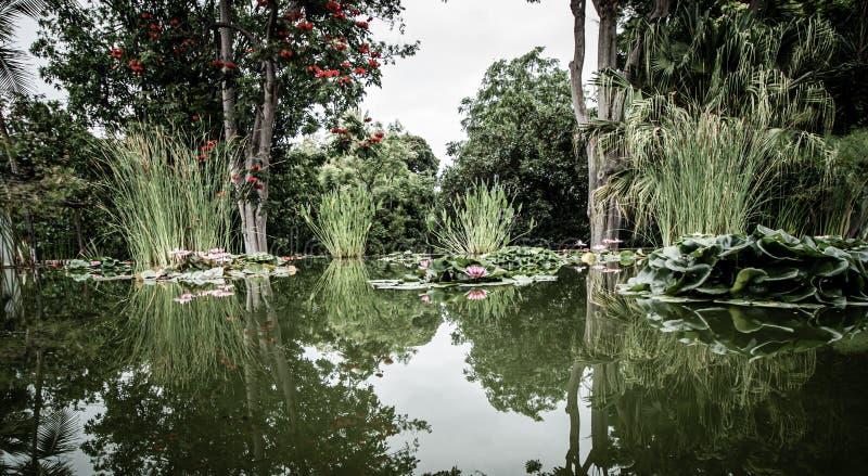 Szeroki widok nad pięknym stawem z wodnymi lelujami fotografia royalty free