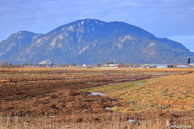 Szeroko Otwarty zimy wieś, ziemia uprawna i zdjęcia royalty free