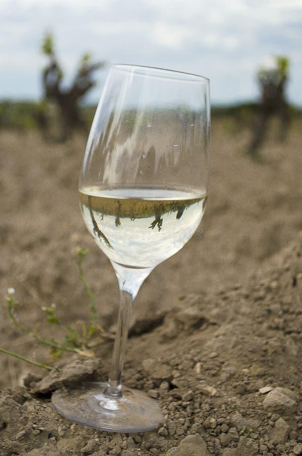 Szkło biały wino na winnica ziemi obrazy royalty free