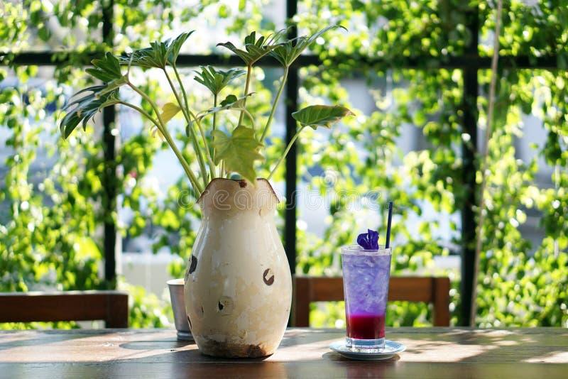 Szkło lukrowa motyliego grochu herbata z cytryny sodą na zamazanym tle, Relaksuje z Tajlandzkim ziołowym napojem dla zdrowego życ obraz royalty free
