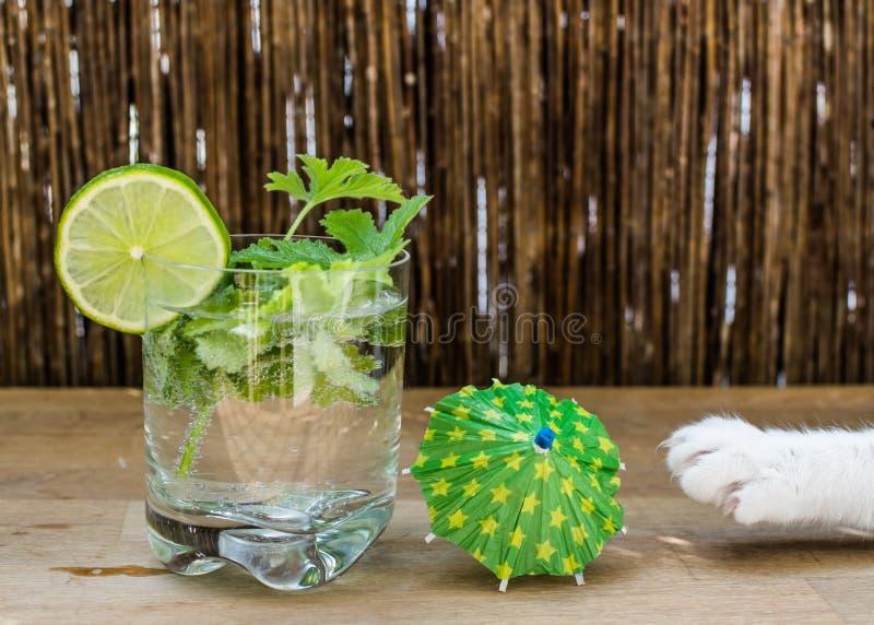 Szkło woda i łapa kot - złodziej zdjęcie royalty free