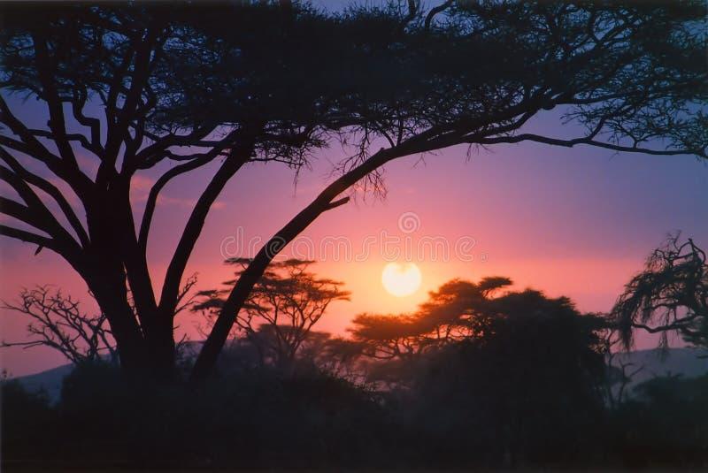 szkarłatny afrykańska wschód słońca fotografia royalty free