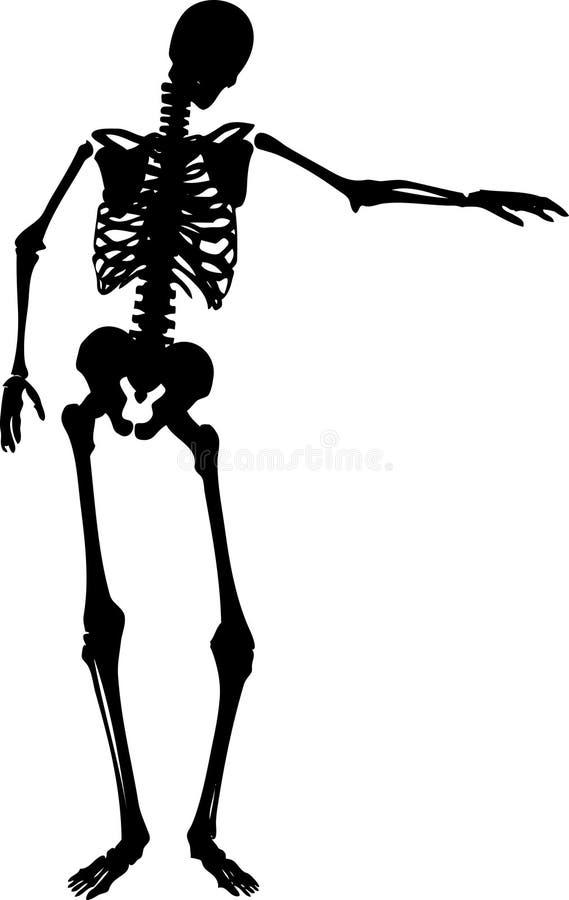 szkielet royalty ilustracja