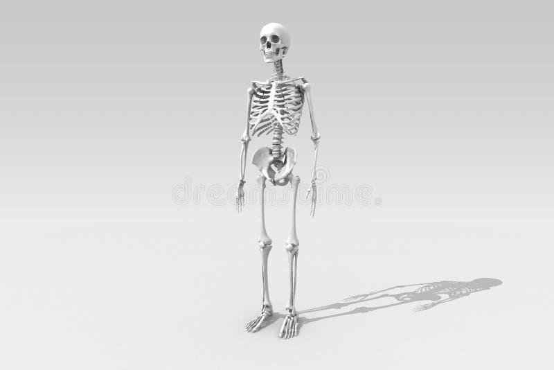 szkielet obraz royalty free