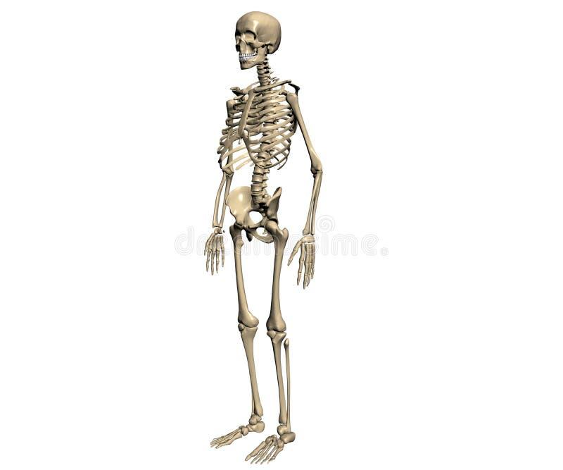 szkielet ilustracja wektor