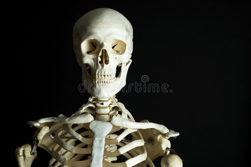 szkielet zdjęcie royalty free
