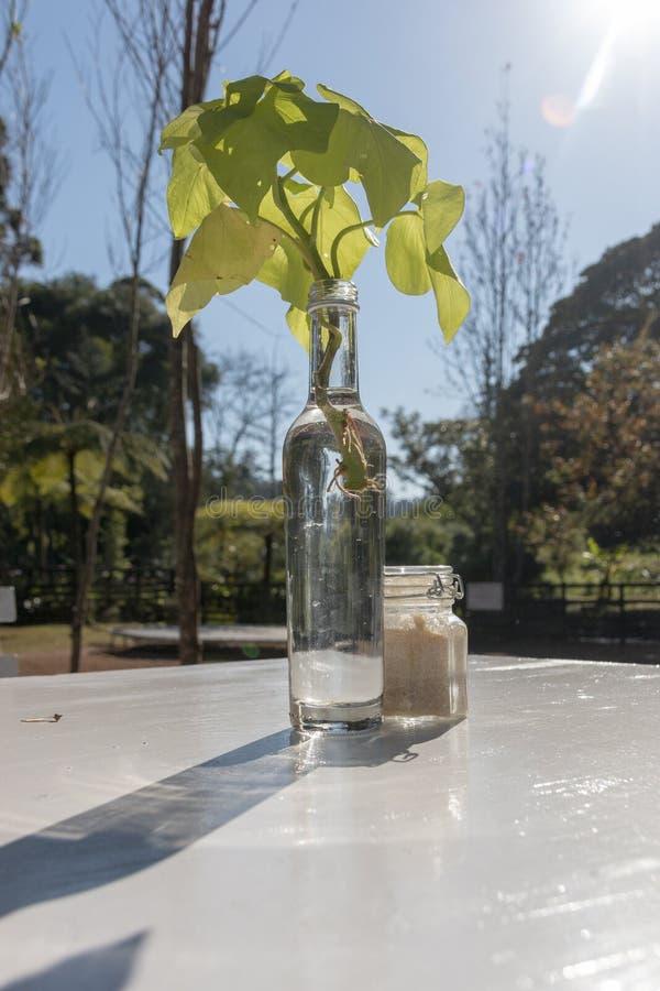 Szklana butelka Na stole obraz stock