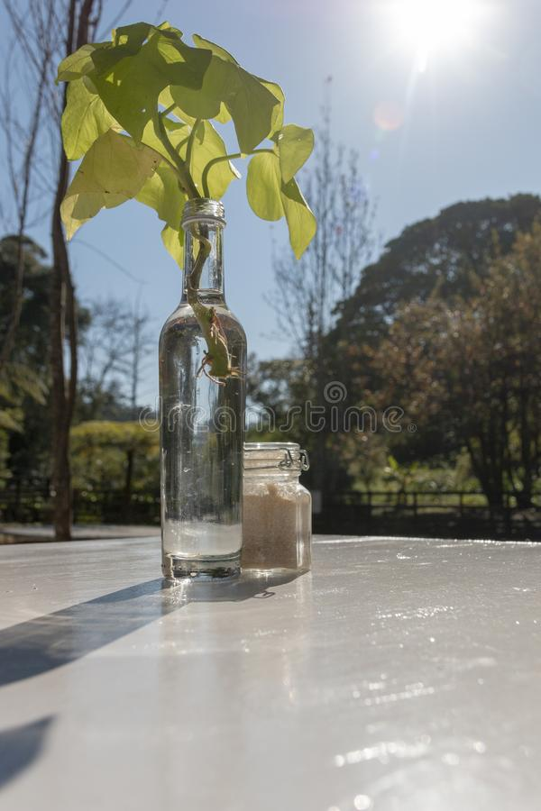 Szklana butelka Na stole obrazy royalty free