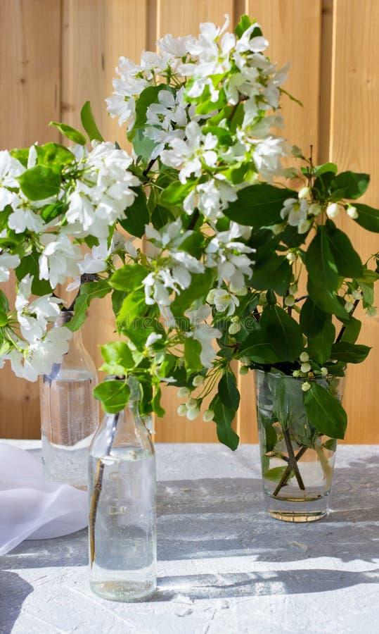 Szklana butelka z kwitnąć gałąź wiśnia, jabłoń obrazy stock