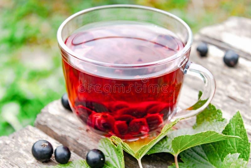Szklana filiżanka owocowa herbata z blackcurrant jagodami na zieleni drewnianych stołowych pobliskich liściach i jagodami rodzyne fotografia royalty free
