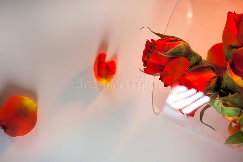 Szklana waza wypełniająca z czerwieni róży płatkami pojęcie aromatherapy zdjęcie royalty free