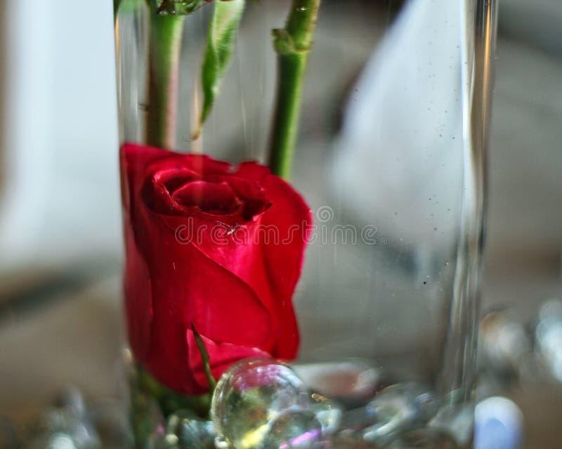 Szklana waza z czerwonymi r??ami obrazy stock