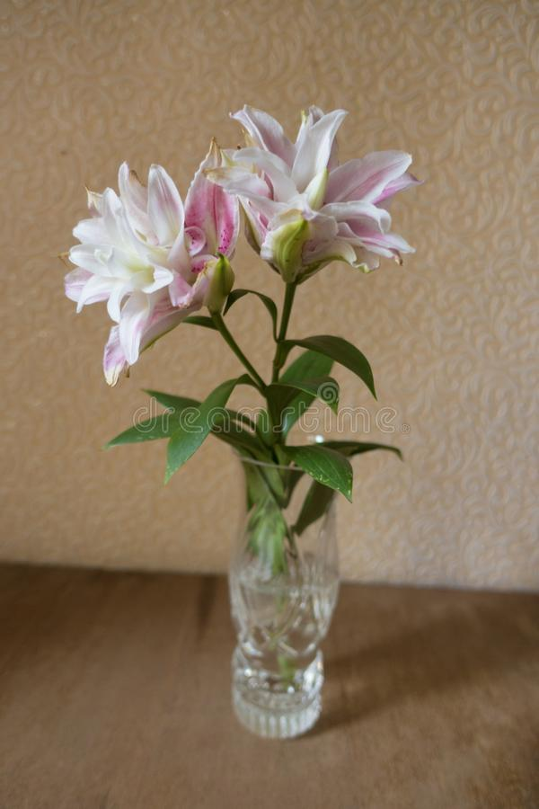 Szklana waza z parą menchii i bielu dwoiste leluje obrazy royalty free