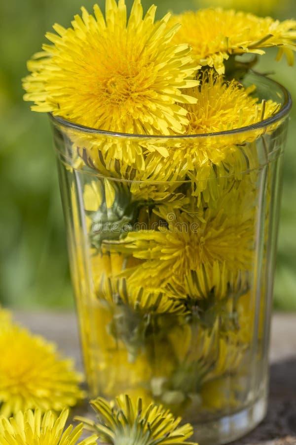 Szklana zlewka z żółtym dandelion kwitnie taraxacum officinale obraz royalty free