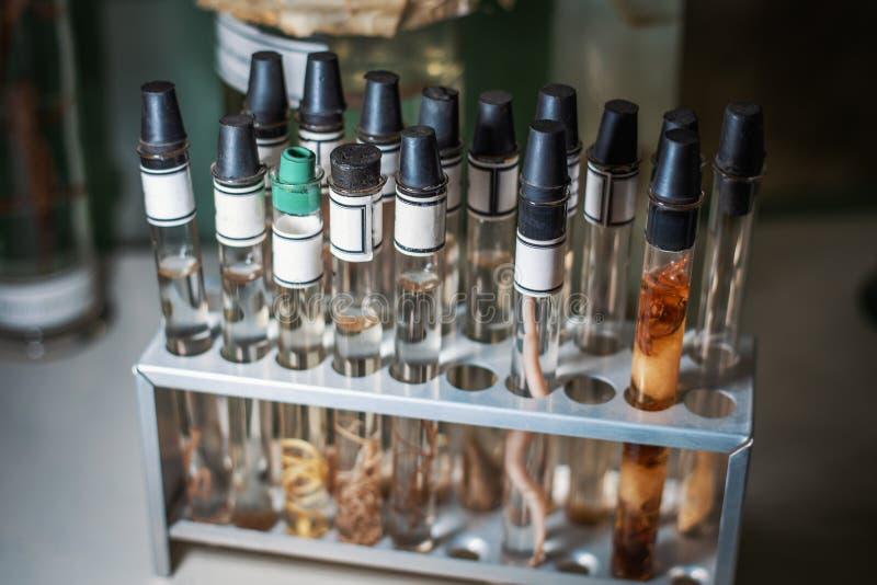 Szklane próbne tubki z dżdżownicami i inne członkonóg próbki dla badania w laboratorium mikrobiologii i biochemii obraz stock