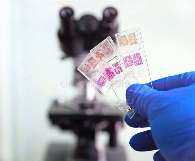 Szklani obruszenia w laboratorium obraz stock