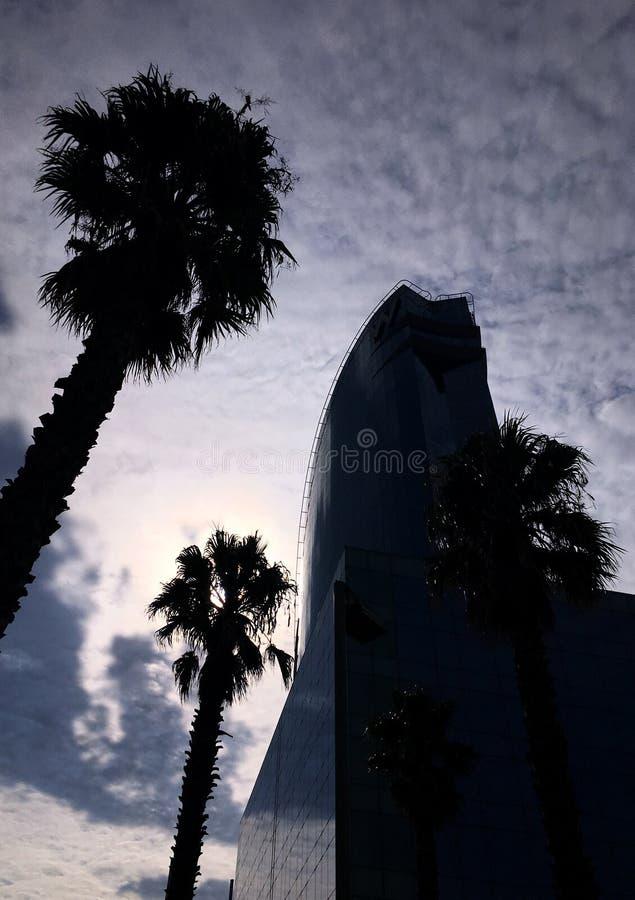 Szklany budynek i drzewka palmowe z chmurnym niebem obrazy royalty free