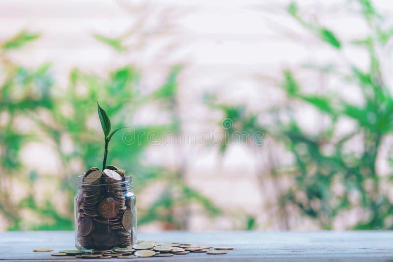 Szklany słój z monety rośliny rozsadami zdjęcie stock