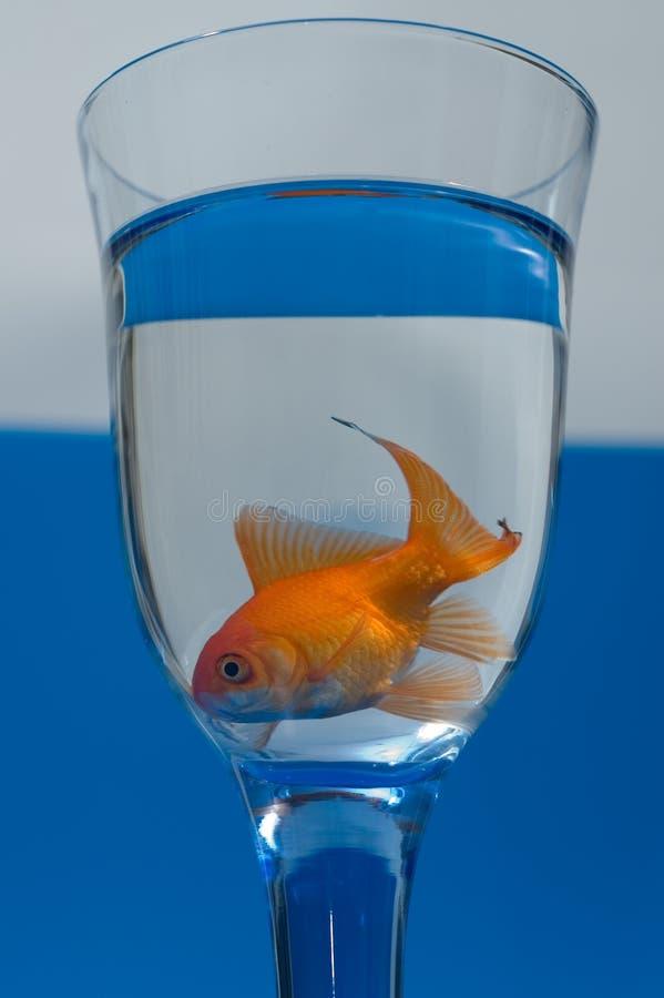 szklany złotą rybkę zdjęcia stock