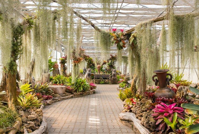 Szklarnia w królowej Sirikit ogródzie botanicznym, Chiang Mai, Tajlandia obrazy royalty free