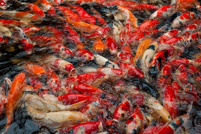 Szkoła ryba zdjęcie royalty free
