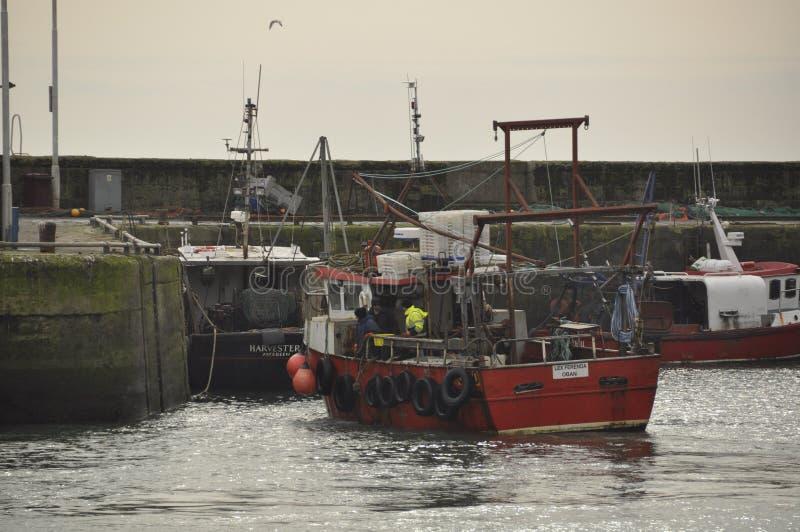 Szkoccy rybołówstwa Pittenweem Szkocja UK zdjęcie stock