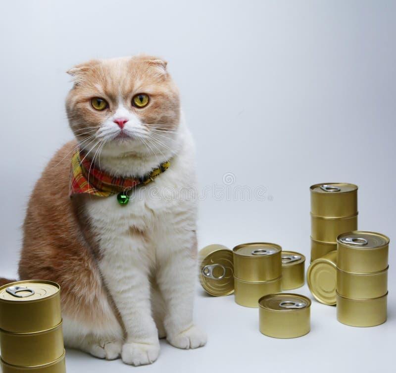 Szkocki Cztery kot z Konserwować foods dla kotów fotografia royalty free