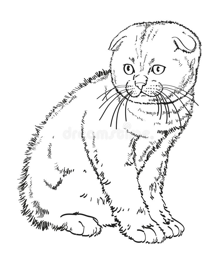 Szkocki lop słyszącego figlarka rysunek ilustracji