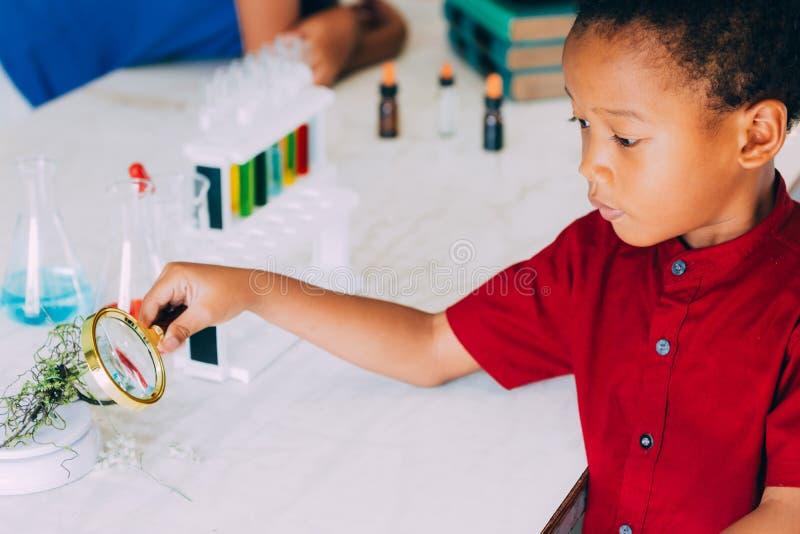 Szkolna chłopiec używa magnifier badać rośliny dla naukowego dowodu w nauki klasie - biologii pojęcie obrazy stock