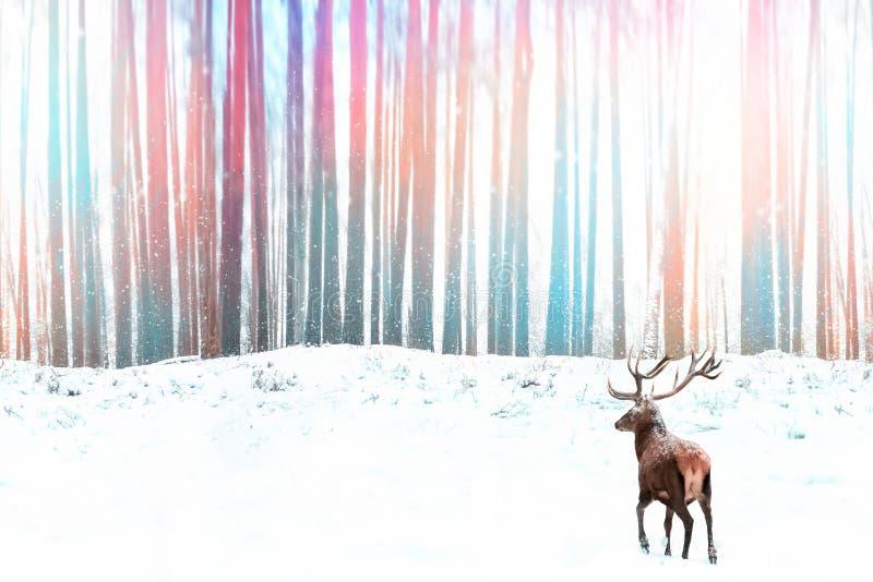 Szlachetny czerwony rogacz przeciw zimy fantazi zimy bożych narodzeń kolorowemu lasowemu wizerunkowi obrazy royalty free