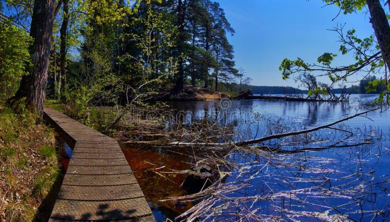 Szlak drewniany wzdłuż nabrzeża, Rezerwat Przyrody Ryfors Gammelskog zdjęcie stock