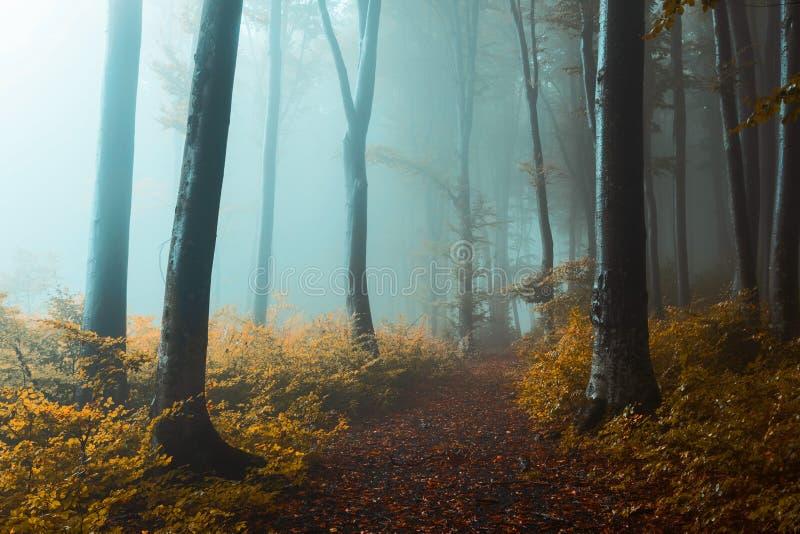 Szlak panoramiczny w mglistym lesie Creepy light w lesie podczas jesiennego mglistego poranka Wróżki zdjęcia stock