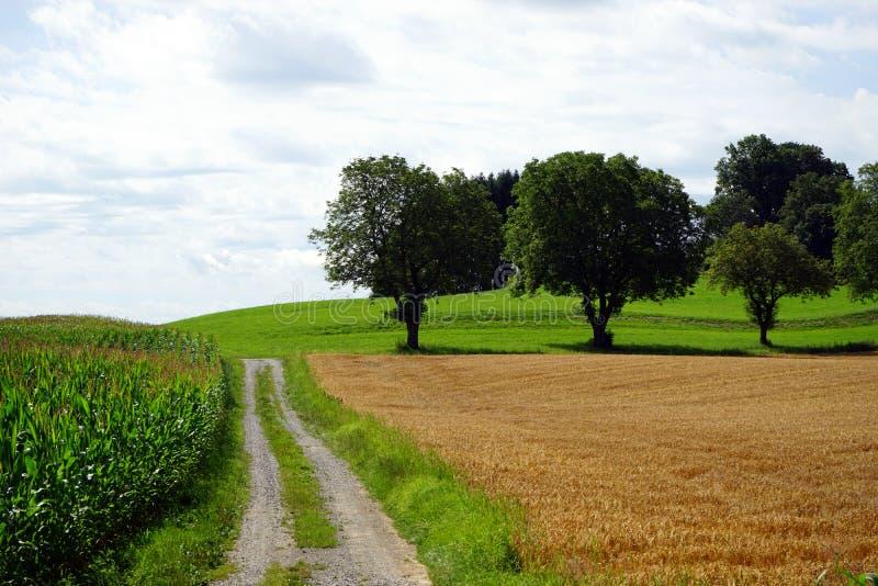 Szlakowy i kukurydzany pole w Niemcy obrazy stock