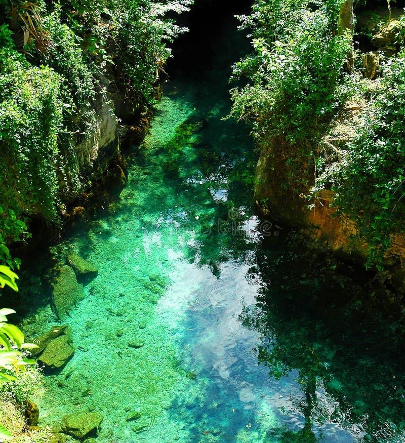 szmaragdowa dżungli fotografia royalty free