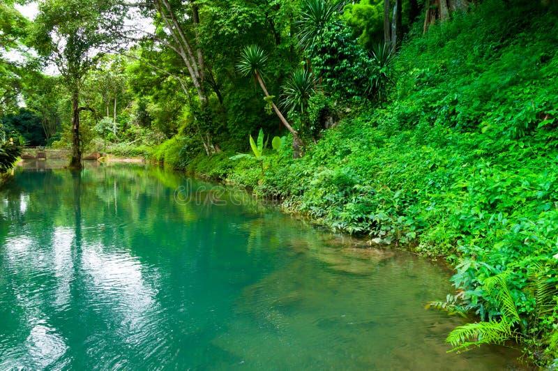 Szmaragdowa laguna w dzikim scenicznym forestamazing pełnego koloru jeziorze obraz royalty free