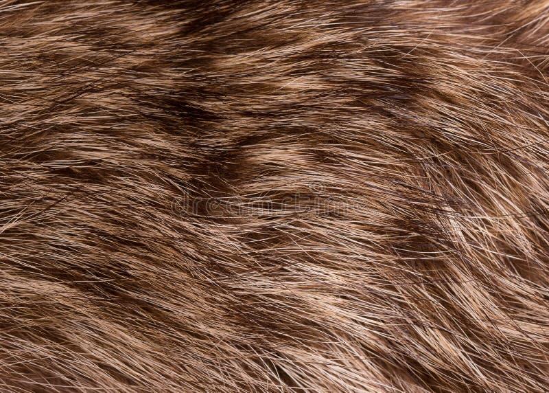 Download Szopowy Futerkowy Zbliżenie Zdjęcie Stock - Obraz złożonej z wzór, raccoon: 106902314