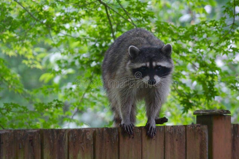 Szopowy Plenerowy na Drewnianym ogrodzeniu zdjęcia royalty free
