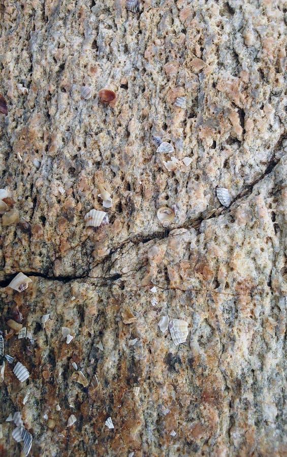 Szorstka surowa coquina skorupy kamienia powierzchni tekstura fotografia stock