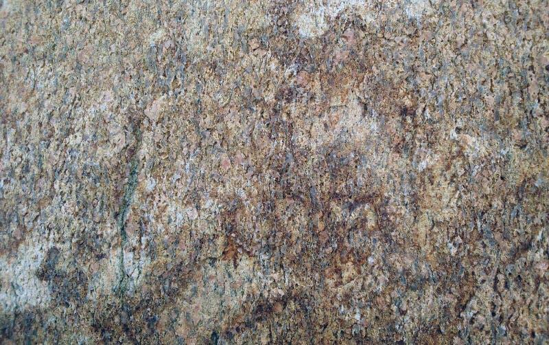 Szorstka surowa coquina skorupy kamienia powierzchni tekstura zdjęcia stock