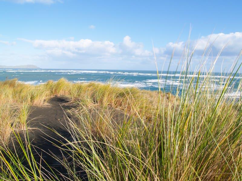 Szorstki morze poza nabrzeżne diuny i roślinność na zachodnim Raglanowym coa obraz stock