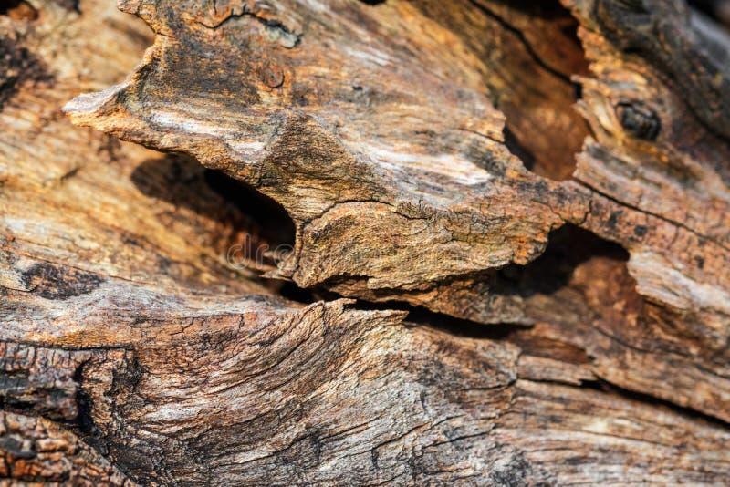 Szorstkie krzywy stary drewno obrazy stock
