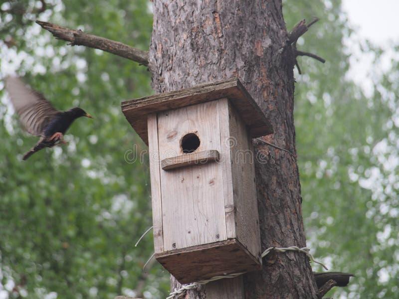 Szpaczek blisko birdhouse Sztuczny bird& x27; s gniazdeczko zdjęcia stock