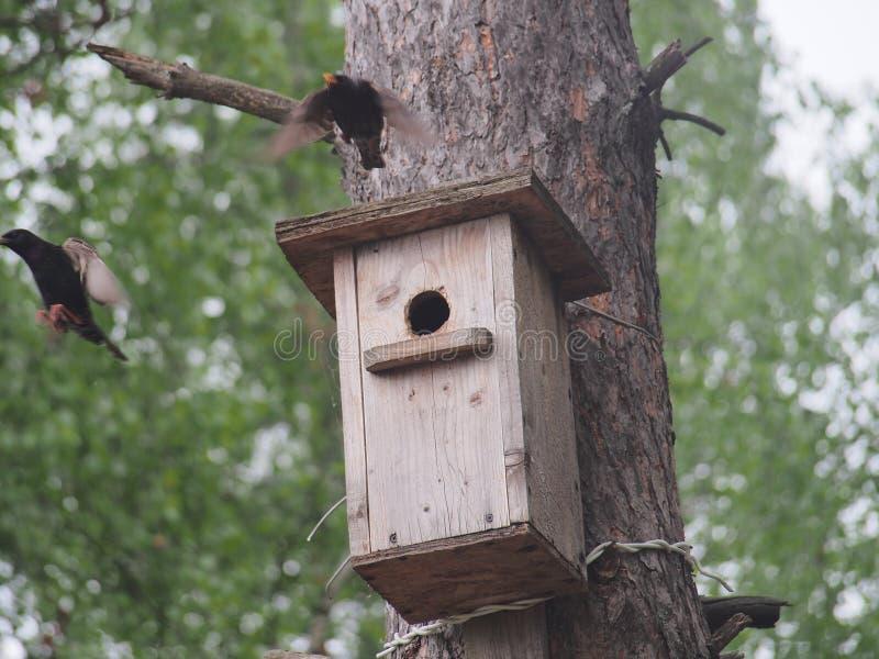 Szpaczek blisko birdhouse Sztuczny bird& x27; s gniazdeczko zdjęcie royalty free