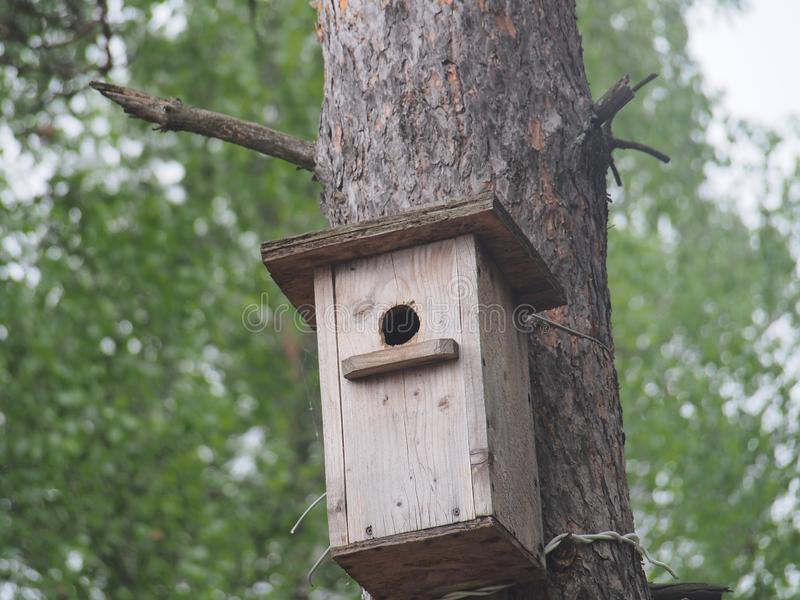 Szpaczek blisko birdhouse Sztuczny bird& x27; s gniazdeczko obraz royalty free