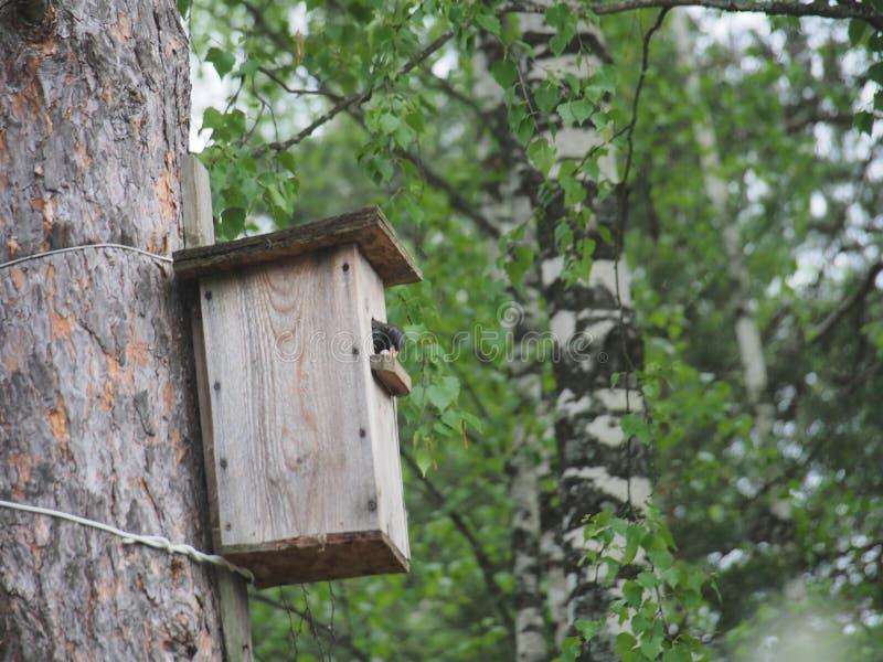 Szpaczek blisko birdhouse Sztuczny bird& x27; s gniazdeczko fotografia stock