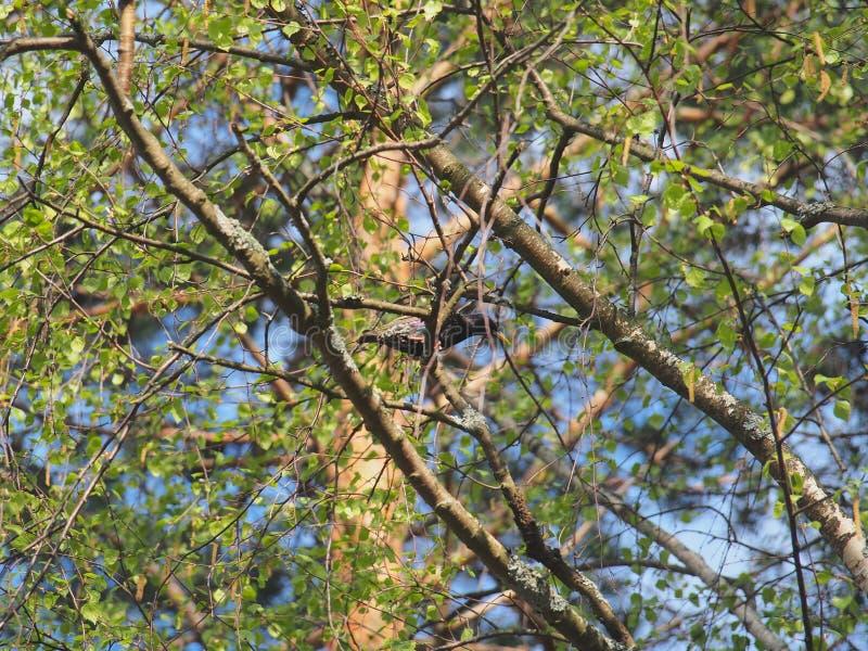 Szpaczek blisko birdhouse Sztuczny bird& x27; s gniazdeczko obrazy stock